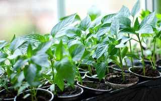 Как подготовить почву для рассады перца своими руками