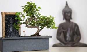 Виды комнатного и садового бонсай — на фото: цветы и растения, деревья