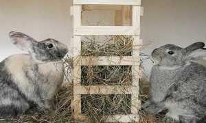 Как правильно кормить кроликов в домашних условиях