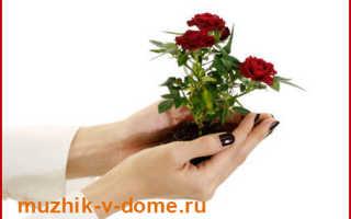 Как выбирать, сажать и ухаживать за розами – видео