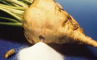 Где в России выращивают сахарную свеклу: в каких районах в основном размещаются плантации, какие страны являются лидерами по производству и экспортерами овоща?