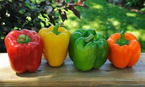 Выращивание перца: выбор сорта, выращивание рассады, уход. Фото
