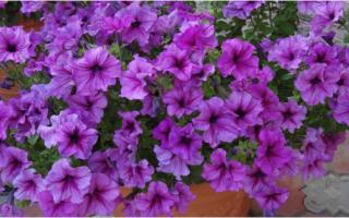 Как сажать цветы в вазоны чтобы не загнили во время дождя
