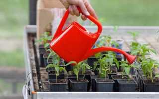 Как вырастить рассаду перца и помидоров в домашних условиях