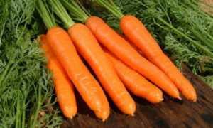 Как правильно обрезать морковь для длительного хранения