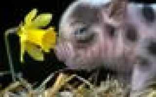 """Дендробиум Фармера — Сад """"Орхидеи"""" — Ольга Алданова (id3590)"""
