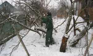 Как и и при какой температуре можно обрезать яблоню зимой