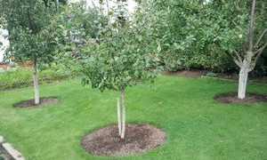 Как правильно посадить сад: выбор деревьев и советы садовода