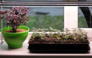 Диодные лампы для растений