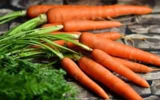 Зачем в июне опрыскивать морковку керосином