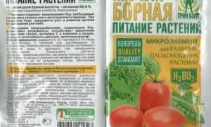 Борная кислота для огурцов: когда и для чего опрыскивать, обработка томатов
