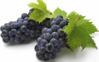 Виноград Изабелла – так все же полезен или вреден этот сорт?