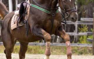 Бинты для лошадей: виды (флисовые, комбинированные), как бинтовать ноги, как сделать своими руками
