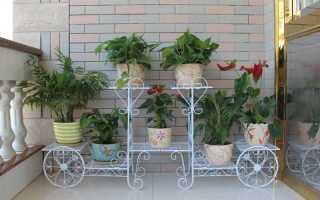 Как красиво и оригинально разместить кашпо с домашними цветами
