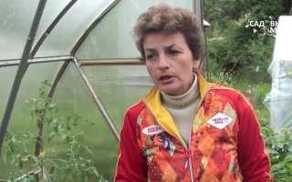 Видео обработки томатов фитоспорином – приготовление раствора и опрыскивание томатов