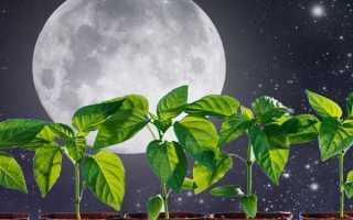 Благоприятные дни для посева на 2020 год для Украины по лунному календарю