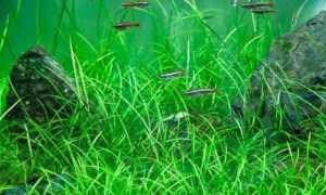 Как сажать растения в грунт аквариума