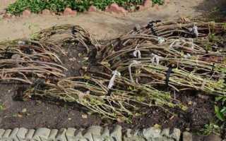 Как готовить садовые цветы к зиме. Подготовка цветов–многолетников к зиме. Как осенью ухаживать за розами
