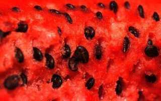 Арбузные семечки – польза и вред, полезные свойства, можно ли есть семечки арбуза, видео