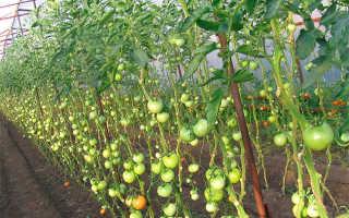 Высокорослые помидоры: сорта и особенности выращивания
