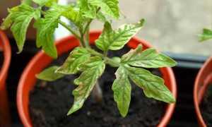 Как понять, каких веществ не хватает рассаде