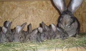 Изготовление маточников для кроликов