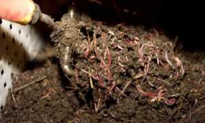 Делаем компостный ящик для приготовления жидкого и густого биогумуса