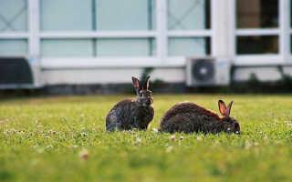 Как избавиться от зайцев на даче, видео