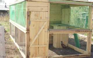 Как построить вольеры для содержания фазанов?