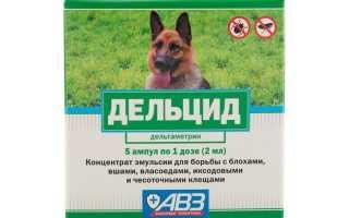 Дельцид: инструкция по применению препарата, обработка кошек и собак от блох