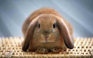 Запор у кролика — способы лечения