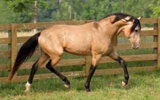 Как называется черная масть лошади