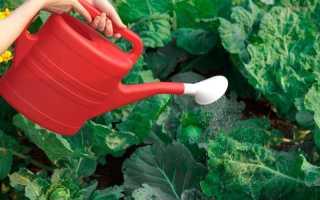 Как правильно опрыскивать капусту борной кислотой