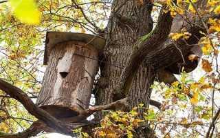 Бортевое пчеловодство, бортничество, сделать борть своими руками, профессия бортник-пчеловод