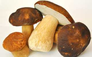 Белый гриб как сохранить на зиму