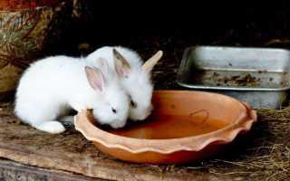 Вода для кроликов зимой