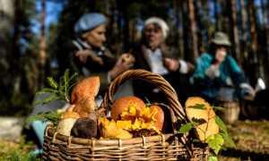 Грибы Белоруссии (51 фото): описание и название ядовитых, съедобных, места сбора, когда появились весенние в лесах, видео