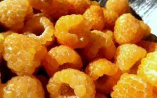 Все, что надо знать для выращивания малины Желтый гигант