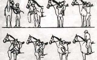 Верховая езда на лошади: основы и рекомендации для начинающих