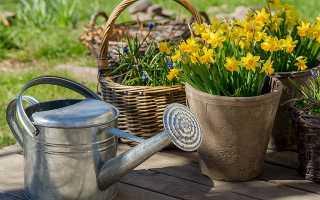 Как правильно вырастить тюльпаны, нарциссы и гиацинты в контейнере?
