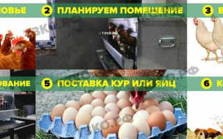 Бизнес-план птицефермы как организовать мини-фабрику на 200 кур