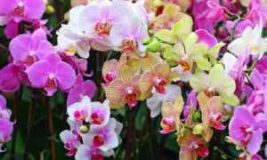 Грунт для орхидеи комнатной: во что нужно сажать, какой необходимый состав почвы должен быть для выращивания, подойдет ли обычная земля, и требования к смеси, фото