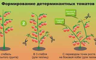 Как правильно формировать томаты в два стебля в теплице