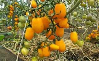 5 сортов фруктовых томатов черри — самых сладких и ярких. Описание, фото