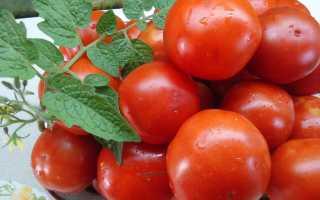 Как вырастить томаты на юге