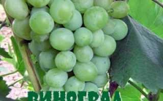 Виноград Русвен: описание сорта, внешний вид, особые характеристики и фото
