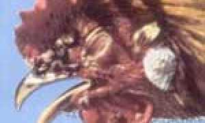 Болезни кур – симптомы и лечение, опасные и передающиеся человеку, симптомы оспы