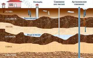 Как осушить болото на дачном участке