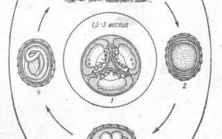 Аскаридоз свиней: описание, симптомы и лечение