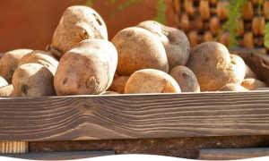 Где зимой хранить овощи и фрукты
